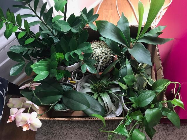 Sisterhood of the Travelling Plants